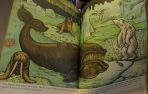 animal book for kids