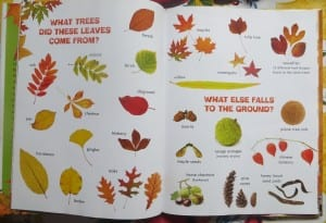 fall books for nature study